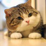 Tiến Việt Express dựa vào yếu tố nào để tính phí vận chuyển mèo đi Canada?