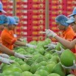 Cách vận chuyển trái cây đi nước ngoài và phương pháp bảo quản